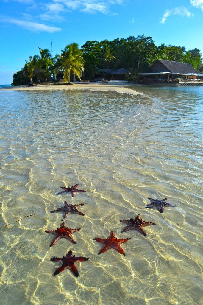 """ERAKOR ISLAND, VANUATU - In Vanuatu, everyone's so friendly even the starfish are happy to pose! OK, I admit to some gentle """"artistic re-positioning"""" but no starfish were harmed in the making of this photo :-)"""