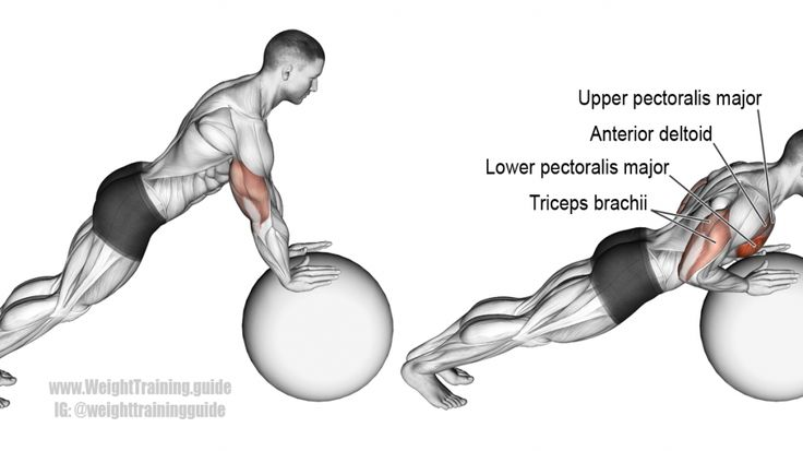 MUSCLE GAINS: Stability ball push-up exercise