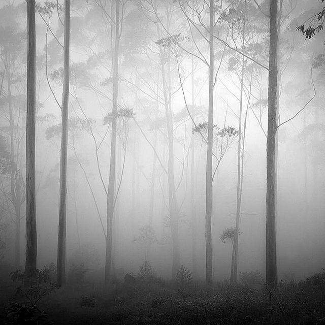 Silence by Hengki Koentjoro, via Flickr. ~ A lovely pic of a misty forest.