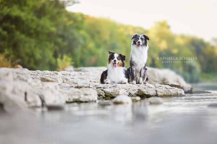 Charaktervolle Hundefotografie Von Raphaela Schiller In Baden Wurttemberg Und Der Schweiz Hunde Fotografie