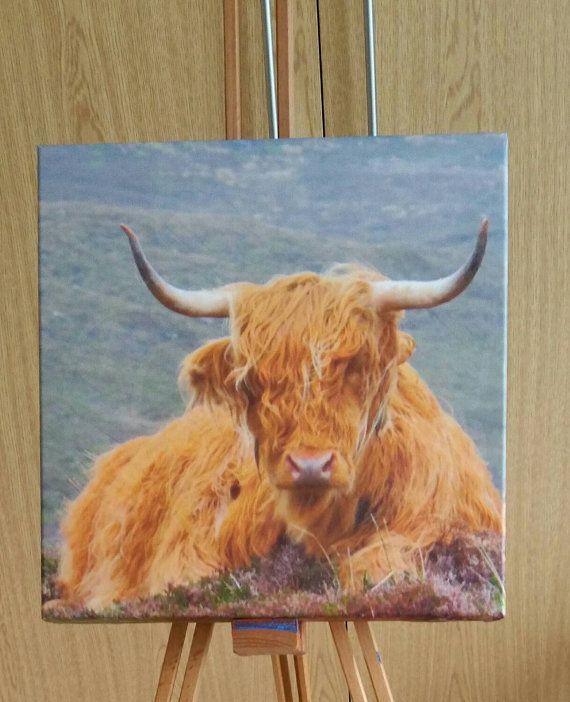Bernie The Scottish Highland Cow Photo Canvas by Drewscrafts8
