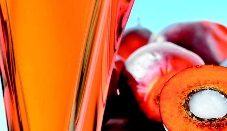 ¿Qué es realmente el aceite de palma y por qué debe preocuparnos?