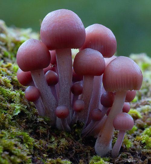 Best Beautiful World Of Mushrooms Images On Pinterest Child - Photographer captures the beautiful diversity of australias fungi