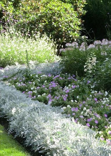 Love the use of Dusty miller and soft colors Isas trägård - Isa's garden