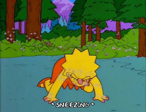 New party member! Tags: lisa simpson episode 2 season 8 flowers forest 8x02 sneezing blooming allergies spring time