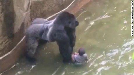 Witnesses describe screams, shots at gorilla enclosure - CNN.com