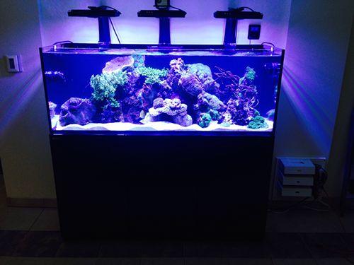 red sea reefer system fish tanks aquariums pinterest. Black Bedroom Furniture Sets. Home Design Ideas
