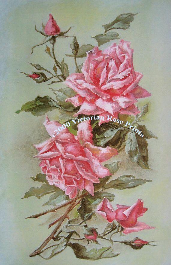 Art Print Catherine Klein French Pink by VictorianRosePrints