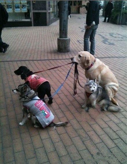 Resultado de imagen para dogs doing jobs funny