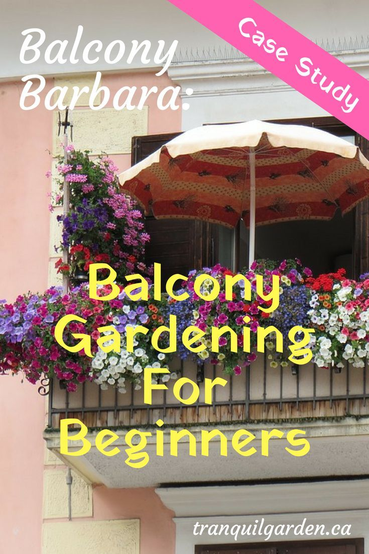 Balcony Barbara Balcony Gardening For Beginners Case Study Gardening For Beginners Urban Gardening Balcony Balcony Garden