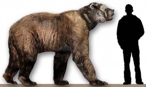 Giant Short-faced Bear Arctodus Simus  Compared to Human