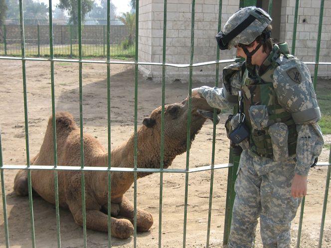 Baghdad Zoo Bombing Google Search Antigone Bengal