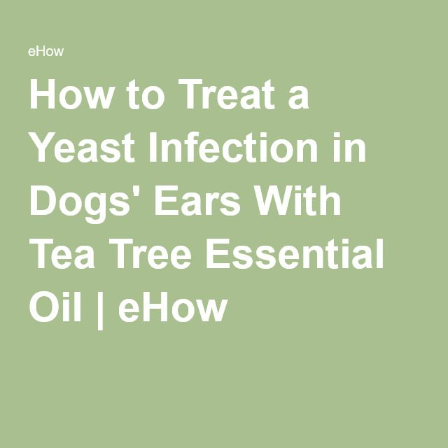 Antifungal Essential Oils For Ear Infection In Dogs