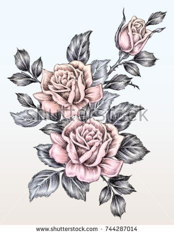 rose drawing in tattoo style