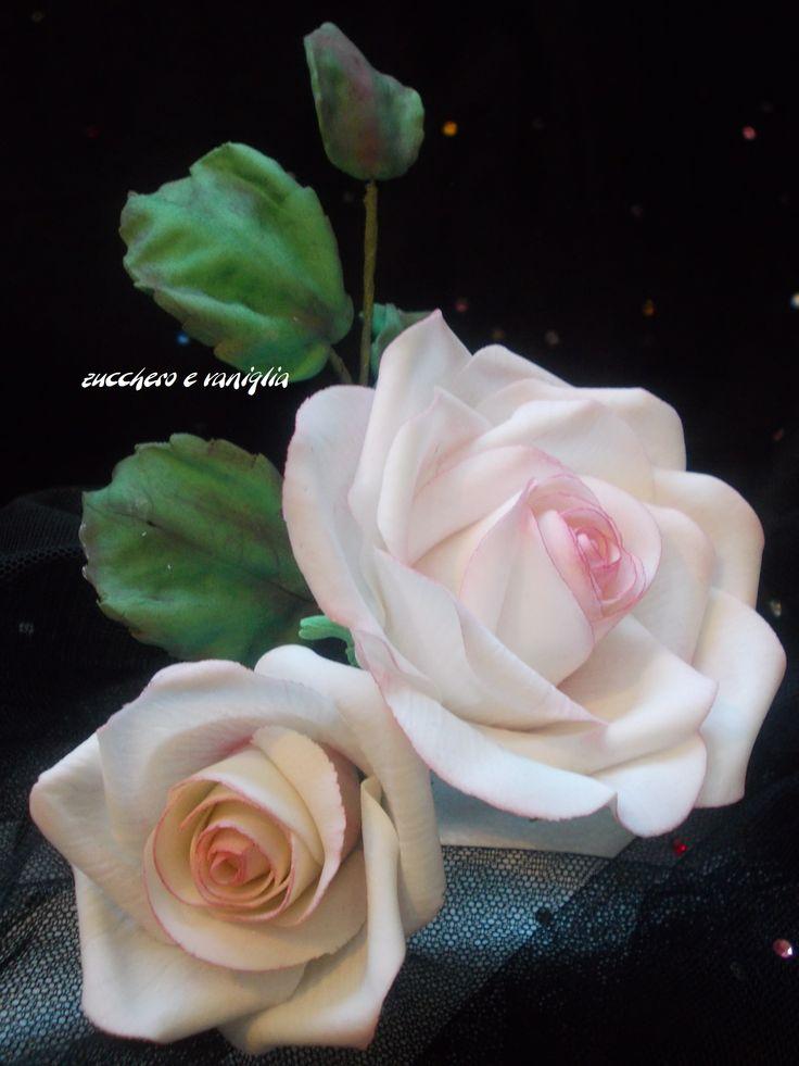 le mie rose