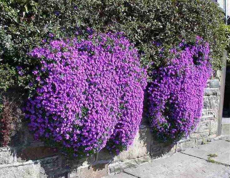 Oltre 25 fantastiche idee su piante perenni su pinterest - Fiori da giardino al sole ...