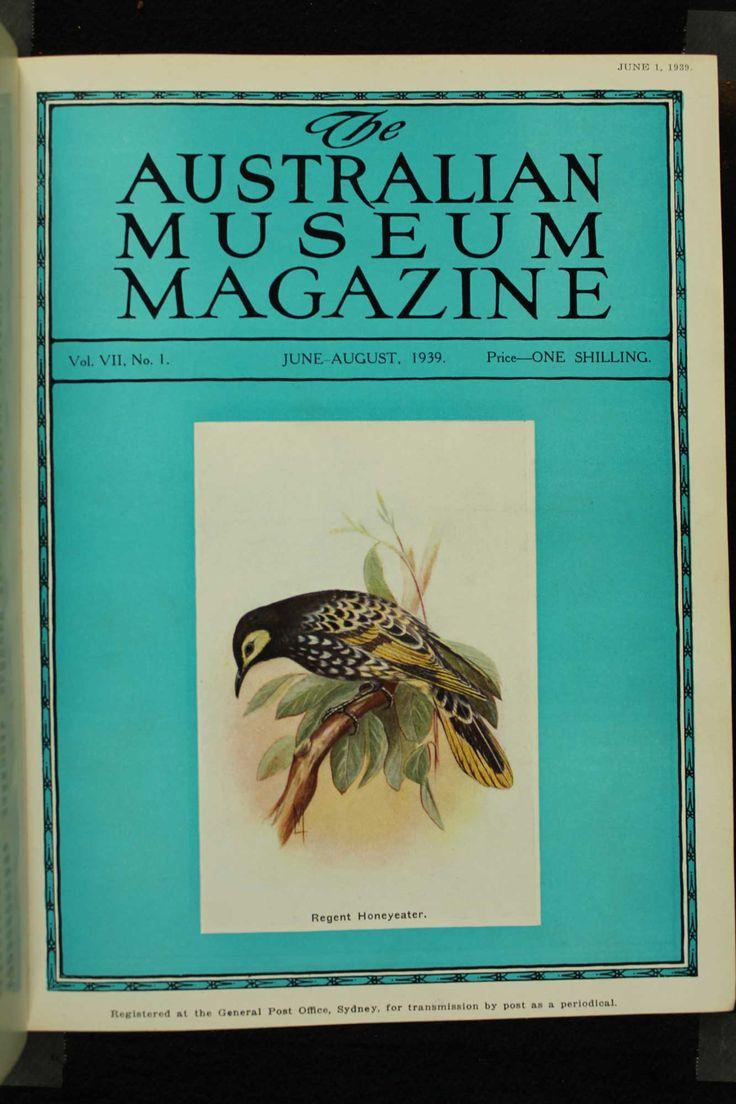 Australian-Museum-Magazine. The Regent Honeyeater. Illustrator: Lilian Medland. http://australianmuseum.net.au/Australian-Museum-Magazine-1921-1942/