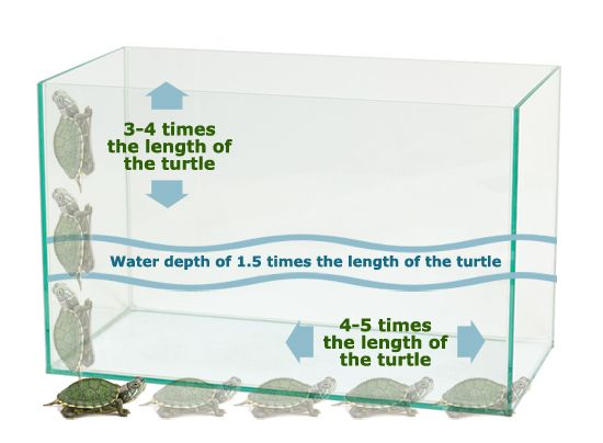Turtle Aquarium Tank Minimum Size