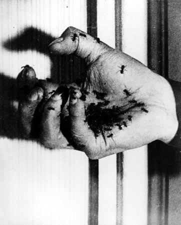 "A still from Dalí's first film with Luis Buñuel, ""Un Chien Andalou."" The 1929 silent short emerged from a conversation the two artists had about their dreams: Buñuel had seen a cloud slicing the moon in two like a razor blade slicing through an eye and Dali's dream had featured a hand crawling with ants.n"