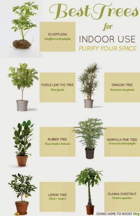 picturesque best large house plants. The best indoor plants will let you grow a beautiful garden  without real can purify your air and some are even edible 70 INDOOR TREES images on Pinterest House Inside