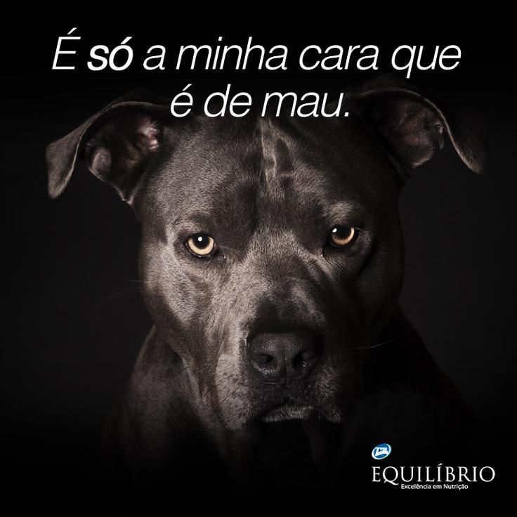 Mas não significa que sou bravo. Não me julgue pelos outros. Me conheça primeiro. Posso ser seu maior e melhor amigo!  I may have an angry face. But it doesn't mean I'm angry. I can be your best friend and love you forever. #cachorro #dog #amor #love