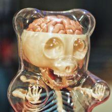 Com certeza você conhece o Gummy Bear. Aqueles ursinhos de goma, que nos persegue desde a infância, quando íamos as vendas de doces do bairro.