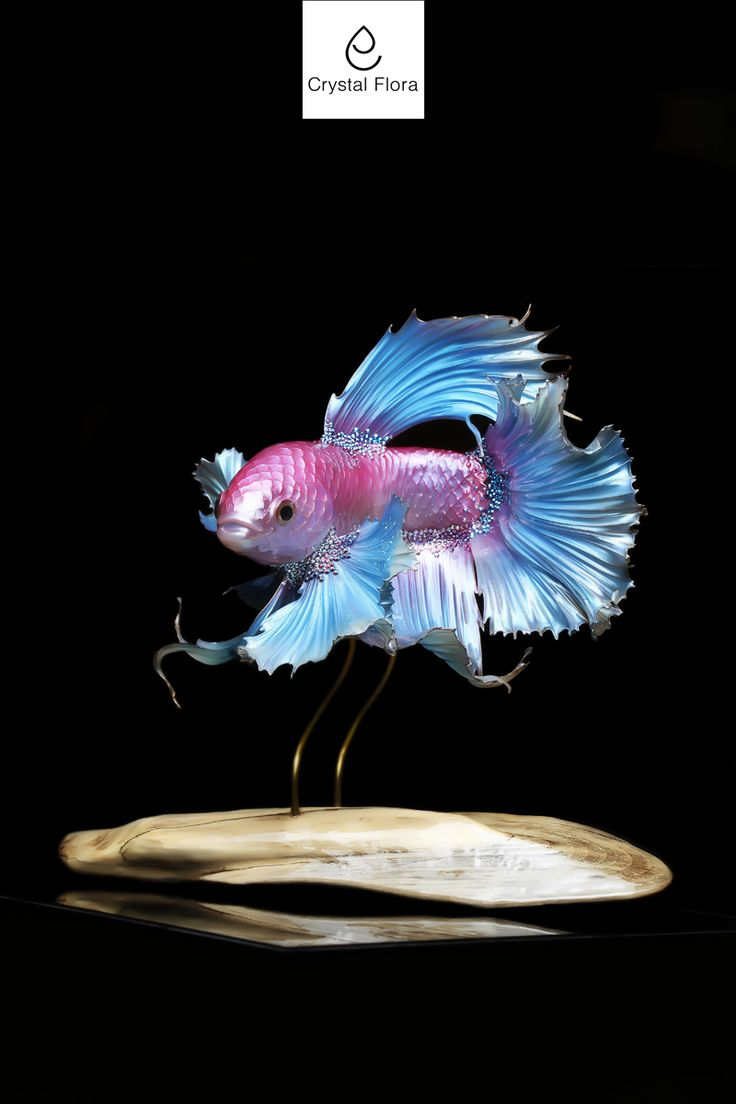 Fighting Fish  (Fish cock) @crystalflora_official   www.crystal-flora.com The fish is made from a photo of a mega talented photographer VISARUTE NGKATAVANICH