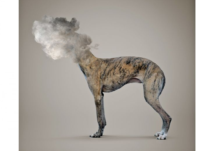 Vincent Fournier, Post Natural History, CLOUDY TRAVELLING DOG [Canis nimbus transsubstantiatio] Capacity of transsubstantation - from dog to cloud- and of teletransportation, 2015.
