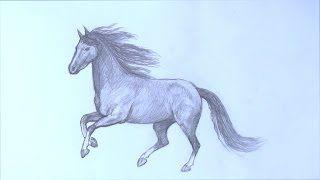 Смотреть онлайн видео Уроки рисования. Как научиться рисовать лошадь карандашом