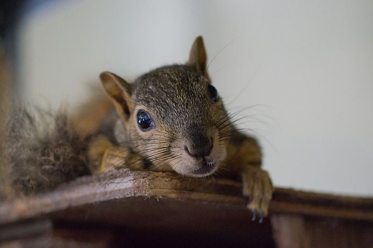 12 Excellent Wildlife Rehab Centers in the U.S....... I would love to recognize Aark, where I intern at. Its in Chalfont, PA.