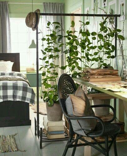 Clothes rack plant stand/ Climber frame