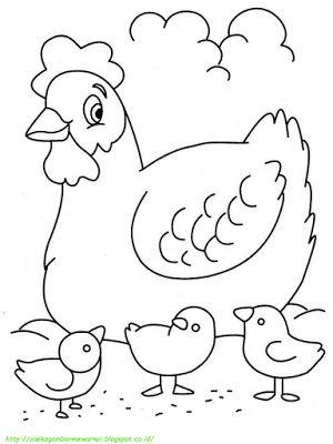 Aneka Gambar Mewarnai - 15 Gambar Mewarnai Ayam Untuk Anak PAUD dan TK.   Gambar berikut adalah gambar unggas, yaitu ayam, gambarnya sangat sederhana dan mudah untuk diwarnai. Gambar ini cocok untuk anak PAUD dan TK.