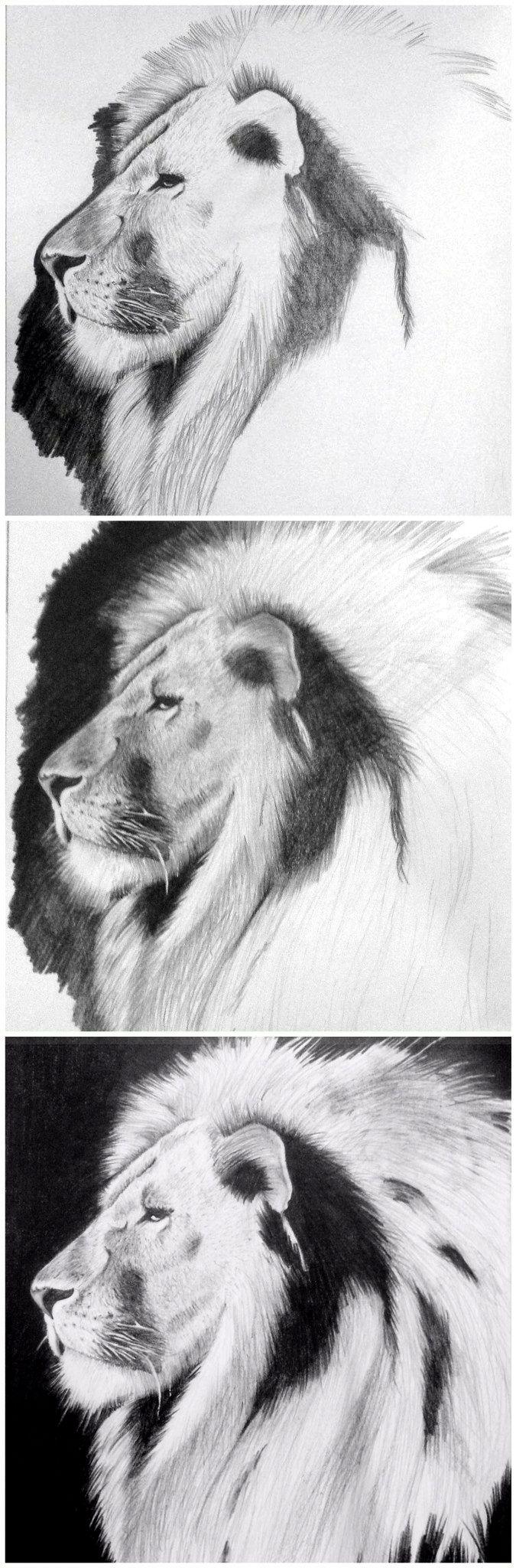 Proceso León #art #grafito #nature #floroperlini #dibujo #arte #lion #floro #perlini #illustration #sketch #blackandwhite #blancoynegro #animals #process