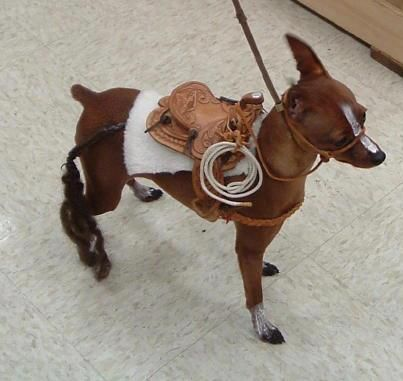 Stella would kill me in my sleep if I made her wear this. MinPin (Miniature Pinscher) disguiesed as a horse. ;)