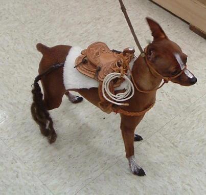 MinPin (Miniature Pinscher) disguiesed as a horse.  ;)