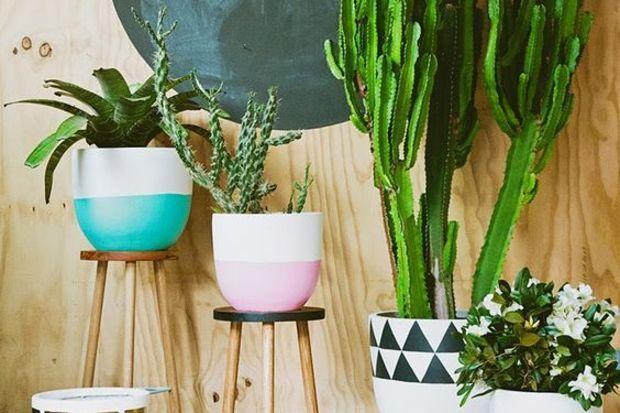 Bitkilerle sonbahar dekorasyonu