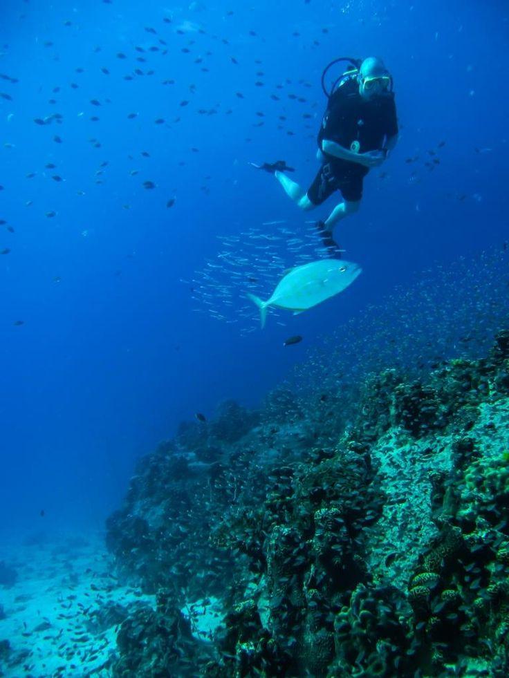 Scuba diving the clear blue sea surrounding Koh Tao, Thailand.