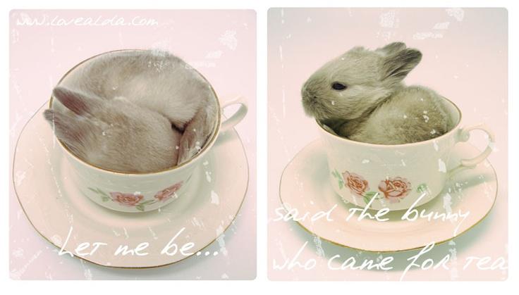 Lovealda's Bunny for Tea