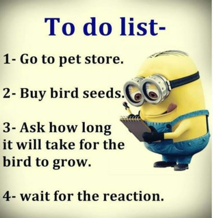 Minion to do list 1,Go to pet store 2,Buy bird seed 3,Ask how long it will take to grow 4,Wait for reaction <3