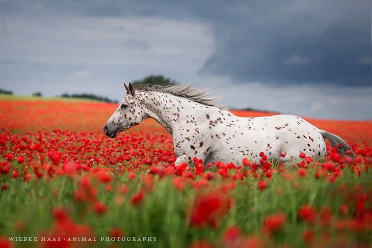 Fotografias de cavalos surpreendentes do fotógrafo Wiebke Haas                                                                                                                                                                                 Mais