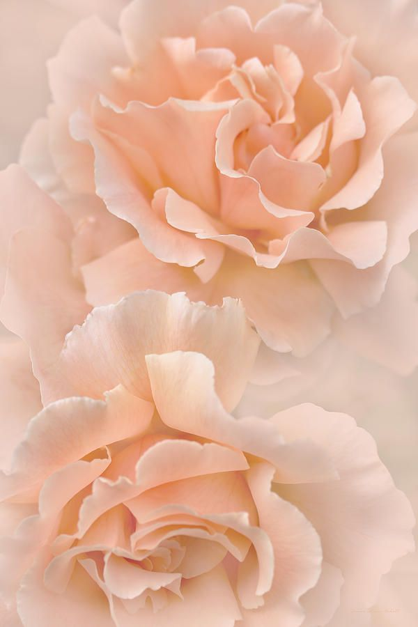 Peach Rose Flowers Bouquet Photograph