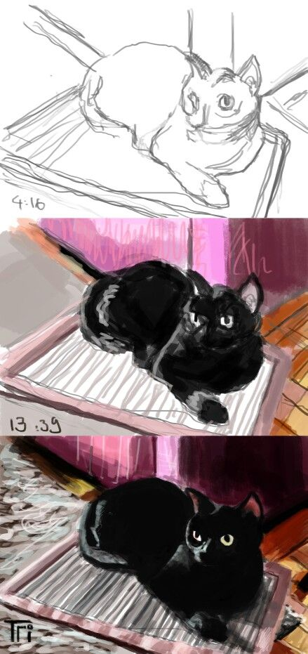 Step by step of cat