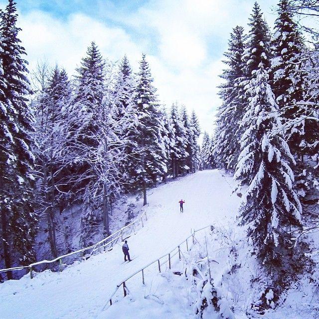 #zima #winter #bieszczady #biegowki #ustrzykidolne