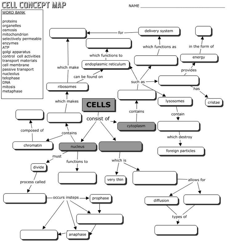 Cell Concept Map Answers CELLS CONCEPT MAP | Teaching biology, Biology lessons, Teaching cells
