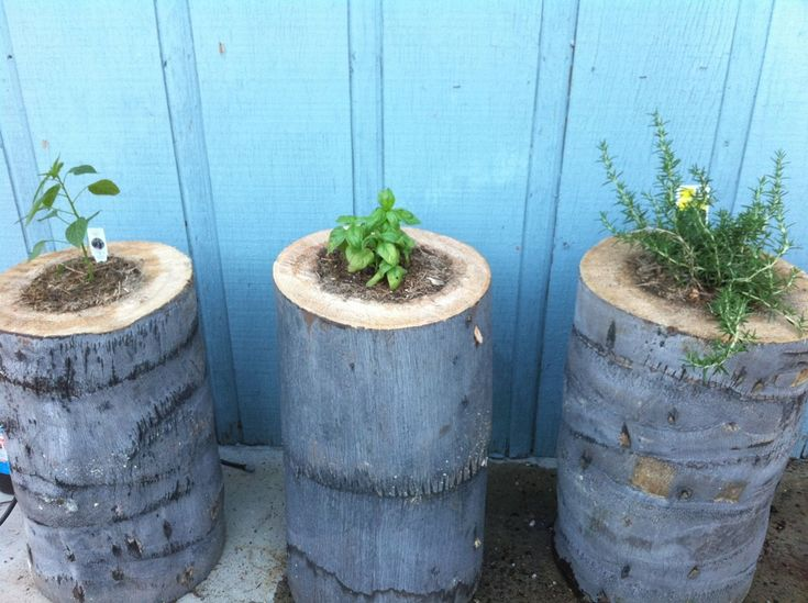 Use a cut down tree for planters!