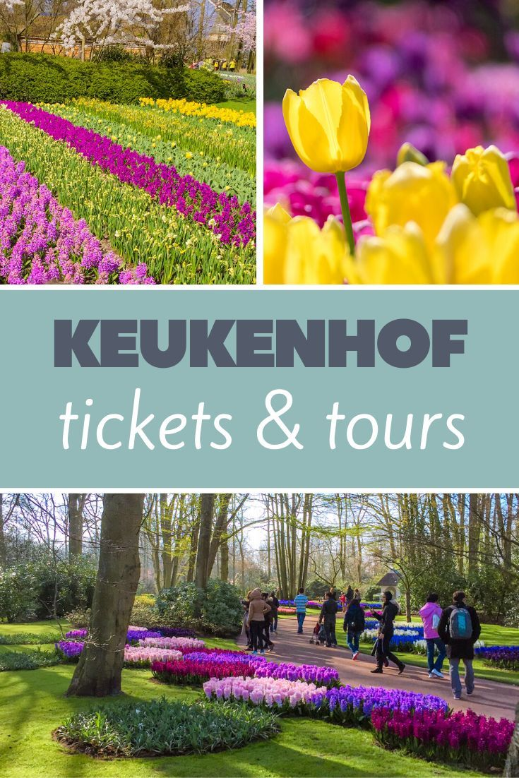 7d67bbedd4074154b9d048699b836eeb - Keukenhof Gardens Transportation And Skip The Line Ticket From Amsterdam
