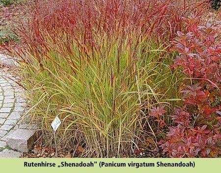 Gräserbeet Sonne 16 Pflanzen Garden Garden Outdoor Plants