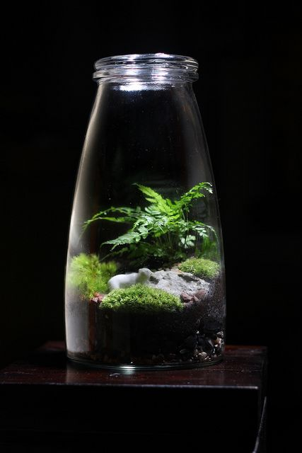 Curved Jar Terrarium by joshleo, via Flickr