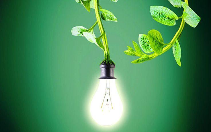 A co-fundadora da Plant-e, Marjolein Helder acredita que a tecnologia de geração de energia a partir de plantas poderia ser revolucionária...