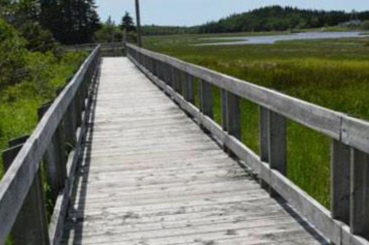Tkipok Trail —1km forest and marsh (boardwalk) trail in Arcadia, Nova Scotia